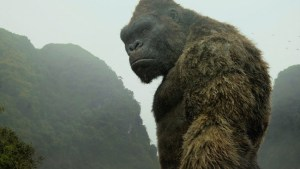 Kong b
